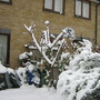 Garden_winter_012