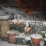 Garden_winter_007