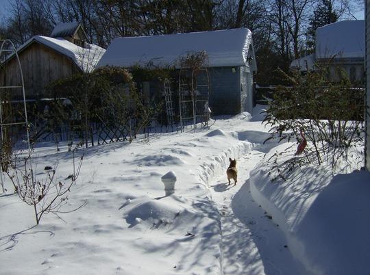 Back Yard View - Taken Today Frebruary 22, 2008