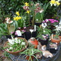 My_display_table_in_spring