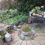 Our_little_courtyard_garden_in_spring
