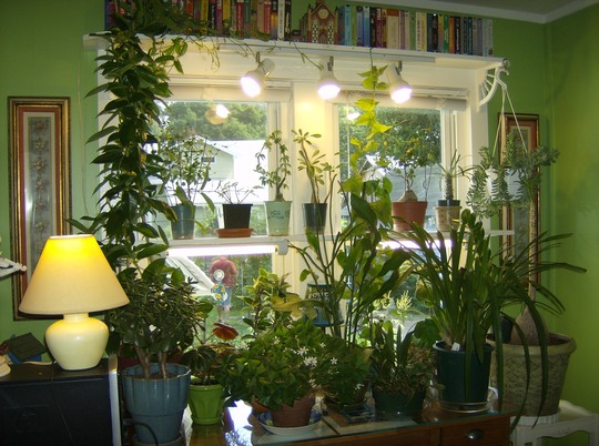 Houseplants In My Office