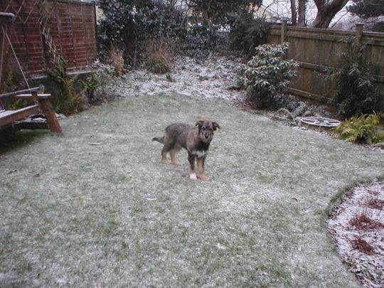 alfie in snow
