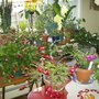 Kitchen Bay Window & Christmas Cactus