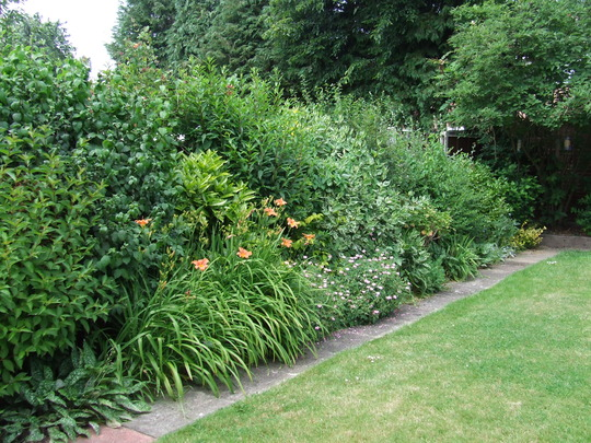 The shrub border in may 2008 grows on you for Shrubs for garden borders