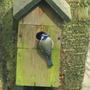 2009_0214birdsgarden0044