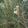 Robin Box
