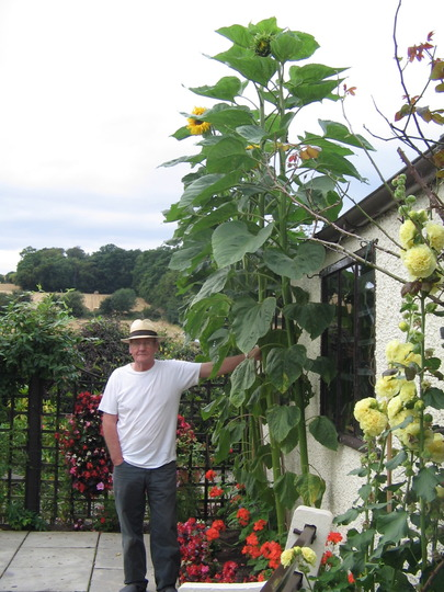 George with sunflower 7th Sept 2009