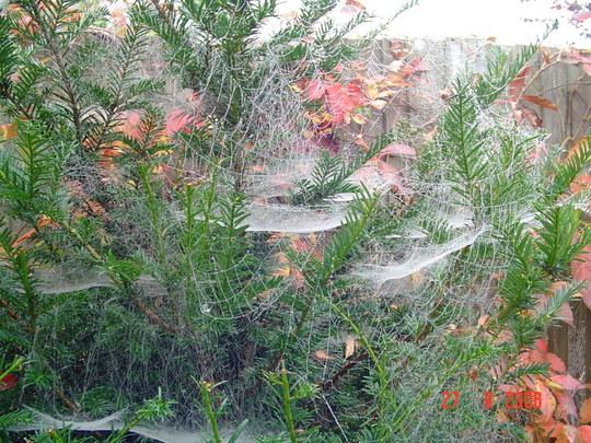 Autumn cobwebs