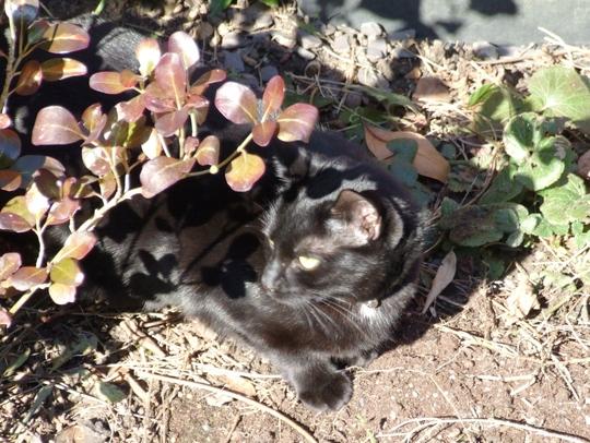 Millie in garden.