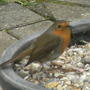 Robin_feb28th