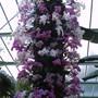 Kew spectacular