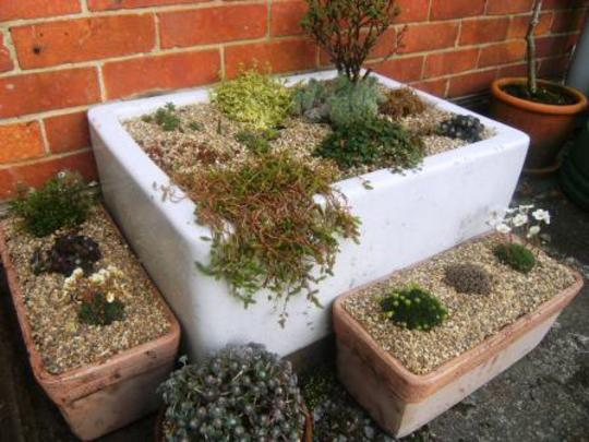 Trough planters with alpines