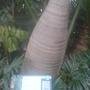 The bottle plant!