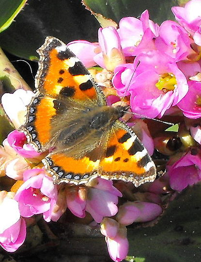 My 1st Butterfly Photo 2009