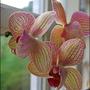 Alison's Orchids