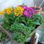 Summer_garden_2008_finn_and_popps_767