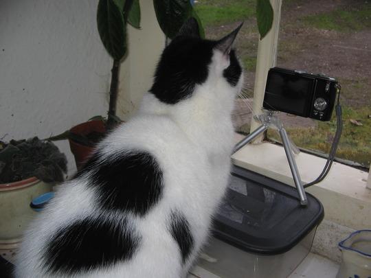 Cat snap.