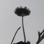 toadstool (?)  on top of a dead palm tree
