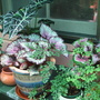 Nursery_pot_plants_6