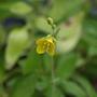 Cute little weed :) growing in Shirley's Alstroemeria