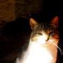 Me cat!