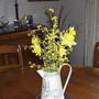 Forsythia and Daffodils