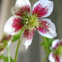 New_flowers_5