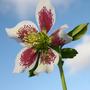 New_flowers_7