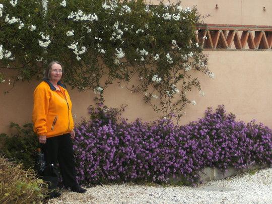Winter jasmine and mauve lantana