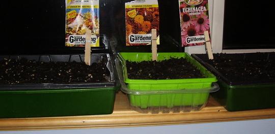 Free flower seeds on kitchen windowsill