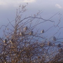 Sparrows and stormy sky
