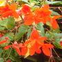 flowers_003.jpg