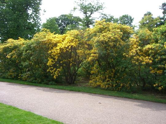Greenwich Park 4
