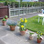 Flower_pots_in_garden_2007