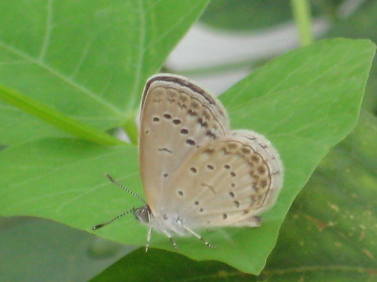 butterfly with white legs