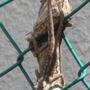 lizard suntan on a branch