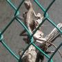 lizard suntan