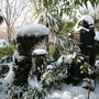 Tree fern protection at work (Musa basjoo (Japanese banana); dicksonia antarctica)
