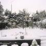 my winter garden 2009
