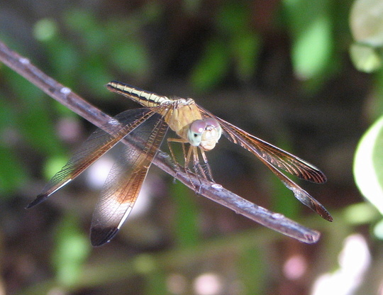 Another one of those dragonflies.