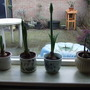 full windowsill