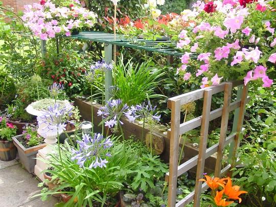 Flowers_everywhere__Mid_July_07._016.jpg