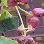 Garden11.3.09_012