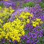 Garden_for_bern_011