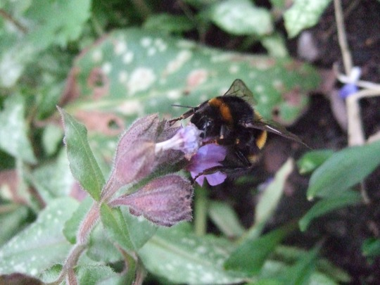 My Bumblebee friend.