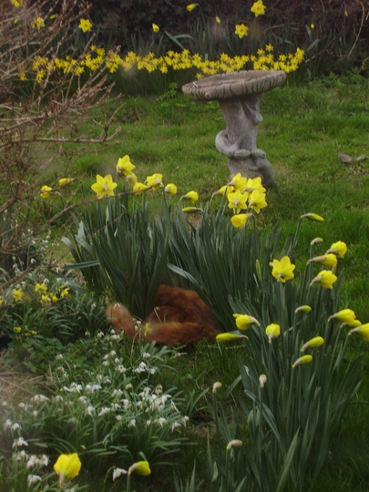 Daff as a brush or Tete-a-Tete with the birdies!