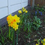 Spring in the front garden