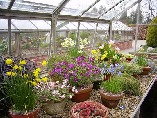 Alpine house at Harlow Carr spring 2007