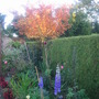 end Sept 2008 - note the last throws  of the delphiniums!!